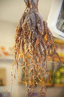 Dried Octopus, Mercado Central, plaza Mercato, Valencia, Spain, Europe