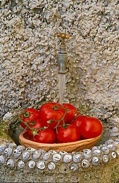 Tomatoes, Camogli, Liguria, Italy