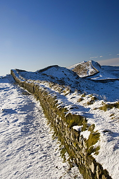 The wall snaking west from Housesteads Wood, Hadrians Wall, UNESCO World Heritage Site, Northumbria, England, United Kingdom, Europe