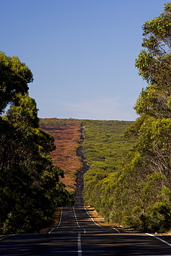 Main road through the forest, Flinders Chase National Park, Kangaroo Island, South Australia, Australia, Pacific