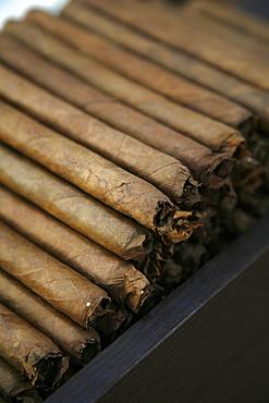 Cigars at the Dannemann factory in Sao Felix, Bahia, Brazil, South America