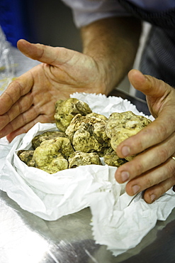 White truffles at Osteria dell'Arco restaurant, part of the slow food movement, Alba, Piedmont, Italy, Europe