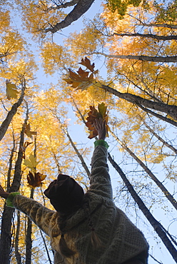 Girl throws leaves in the air to celebrate autumn, Vashon Island, Washington State, United States of America, North America