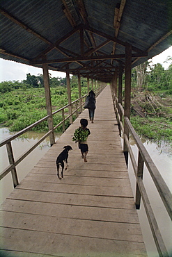 Dog follows boy carrying bananas in small community outside Iquitos, Amazon River, Peru, South America