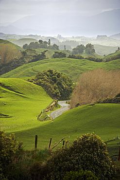 Rangiwahia Road, winding through sheep pasture in rural Manawatu, North Island, New Zealand, Pacific