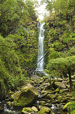 Erskine Falls, Great Otway National Park, Victoria, Australia, Pacific
