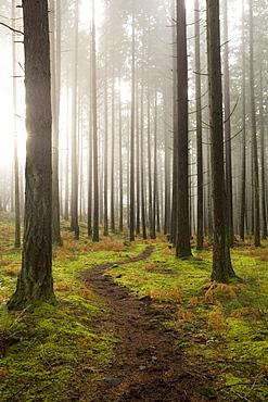 Trail through the woodland, Vashon Island, Washington State, United States of America, North America