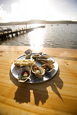 Oysters on half shells, California, United States of America, North America