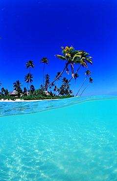 Coconut palms on the sandy beach, Indonesia, Wakatobi Dive Resort, Sulawesi, Indian Ocean, Bandasea
