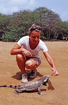 Green leguan, green iguana, Iguana iguana, Netherlands Antilles, Bonaire, Bonaire, Washington Slagbaai National Park, Pos Mangel