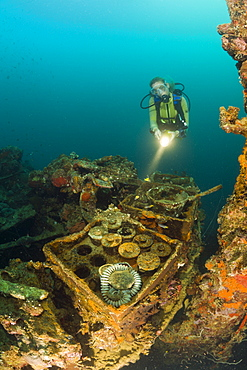 Diver discover armed Munition from II World War at Japanese Warship Helmet Wreck, Micronesia, Palau