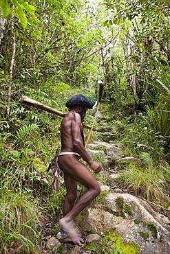 Dani warrior, Baliem Valley, West Papua, Indonesia, Southeast Asia, Asia