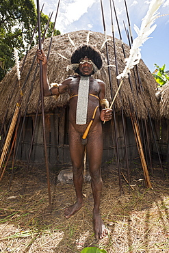 Warrior of Dani tribe, Baliem Valley, West Papua, Indonesia, Southeast Asia, Asia