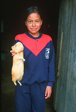 A rural girl holds one of the guinea pigs her family raises as a traditional food, Highlands, Ecuador