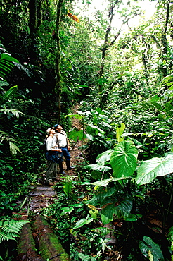 Bosque Mindo-Nambillo a protected reserve of sub-tropical cloud forest at 2500' on western slopes of the Andes in the Choco Bio-region, North of Quito, Highlands, Ecuador
