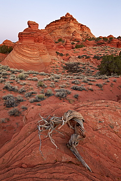 Red sandstone Coyote Buttes at dawn, Coyote Buttes Wilderness, Vermillion Cliffs National Monument, Arizona, United States of America, North America