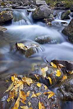 Cascades on the Big Bear Creek in the fall, San Miguel County, Colorado, United States of America, North America