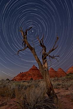 Juniper and sandstone cones under the stars, Coyote Buttes Wilderness, Vermilion Cliffs National Monument, Arizona, United States of America, North America