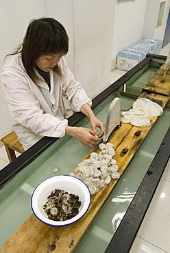 Suzhou No. 1 Silk Factory, Suzhou, Jiangsu province, China, Asia