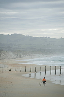 Otago Harbour, St. Clair, Otago, South Island, New Zealand, Pacific