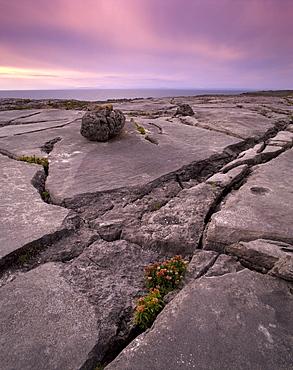 Limestone plateau at sunset, karstic landscape, Burren region, County Clare, Munster, Republic of Ireland, Europe