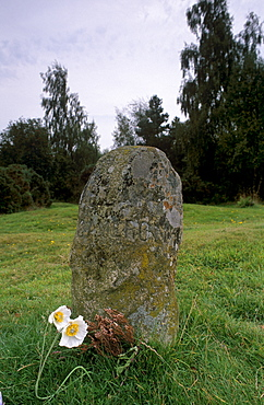 Headstone marking the clans' graves (clan Cameron), Culloden Moor battlefield, near Inverness, Highland region, Scotland, United Kingdom, Europe