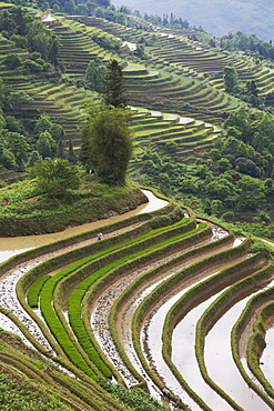 Terraced rice fields, Yuanyang. Yunnan Province, China, Asia