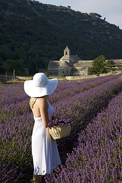 Woman in a lavender field, Senanque Abbey, Gordes, Provence, France, Europe