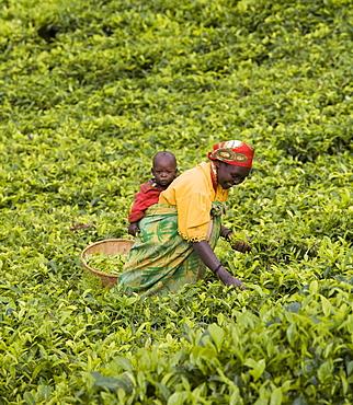 Village of Masango, Province of Cibitoke, Burundi, Africa