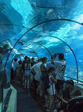 Aquarium, Barcelona, Catalonia, Spain, Europe