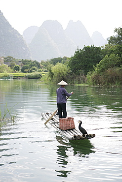 Fisherman with cormorants, Yangshuo, Li River, Guangxi Province, China, Asia