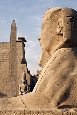 A sphinx stands in front of Luxor Temple, Luxor, Thebes, UNESCO World Heritage Site, Egypt, North Africa, Africa