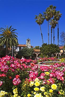 Roses, Central Courtyard, Mission San Juan Capistrano, Orange County, California, United States of America, North America