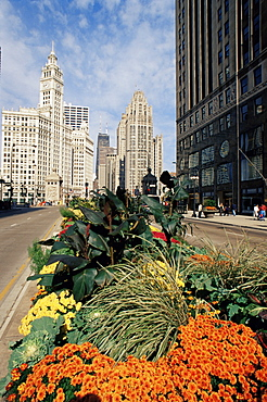 Michigan Avenue and Wrigley Tower, Chicago, Illinois, United States of America, North America