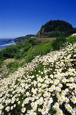 Boardman State Park, Brookings, Oregon, United States of America, North America