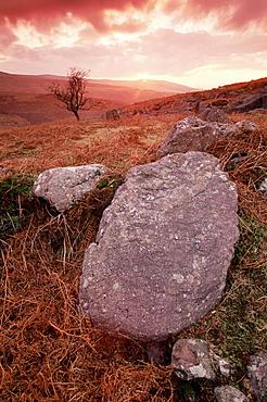 Knockmealdown Mountains, County Tipperary, Munster, Republic of Ireland, Europe