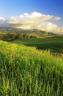 Otay Lakes area, San Diego, California, United States of America, North America