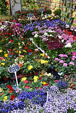Displays of flowers on the floating flower market (Bloemenmarkt), Singel, Amsterdam, North Holland, Netherlands, Europe