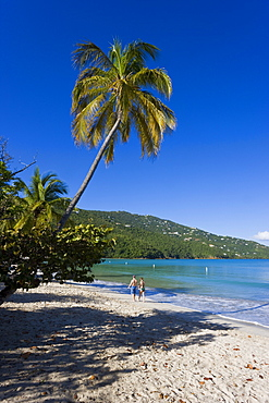 Palms and beach at Magens Bay, the most famous beach on St. Thomas, St. Thomas, U.S. Virgin Islands, West Indies, Caribbean, Central America