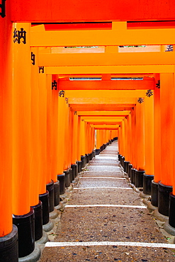 Red Torii gates, Fushimi Inari Taisha Shrine, Kyoto, Kansai Region, Honshu, Japan, Asia