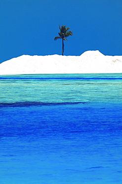 Sandbank and palm tree on tropical beach, Maldives, Indian Ocean, Asia
