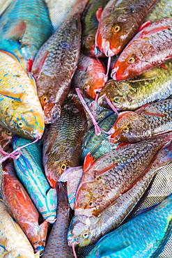 Local fish market, Praslin, Republic of Seychelles, Indian Ocean, Africa