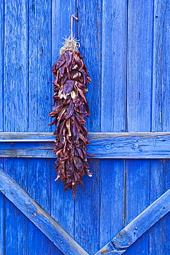 Red chilli peppers on barn door, New Mexico, United States of America, North America