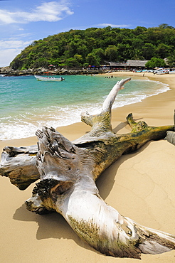 Mexico, Oaxaca, Puerto Escondido, Puerto Escondido Bleached tree stump on sand at Playa Manzanillo beach with tourist boats people and tree covered headland beyond.