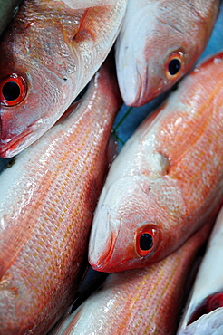 Mexico, Guerrero, Zihuatanejo, Close cropped view of red snapper fish for sale in the market.