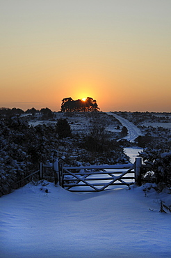 England, East Sussex, Ashdown Forest, Snow covered Camp Hill tree clump in winter with sun shining through trees on the horizon