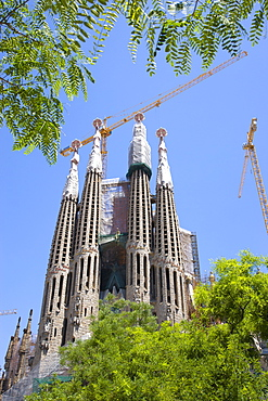 Spain, Catalonia, Barcelona, The spires of the basilica church of Sagrada Familia deisigned by Antoni Gaudi seen through the branches of a tree in the Eixample district.