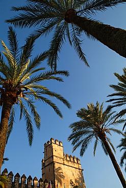 Spain, Andalucia, Cordoba, The Alcazar.