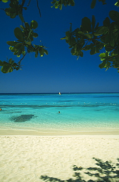 WEST INDIES Jamaica Montego Bay Beach through mangrove trees with swimmers in shallow water and windsurfer out at sea