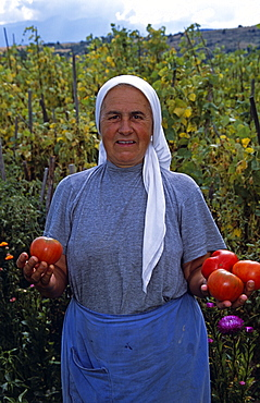 BULGARIA  Dobarsko Farmer holding tomatoes in field. Travel Tourism Holiday Vacation Explore Recreation Leisure Sightseeing Tourist Attraction Tour Dobarsko Bansko Bulgaria Bulgarian Tranquil Tranquility East Eastern Europe European Tradition Traditional Person Way Of Life Farm Farming Farmer Ethnic Peasant Work Working Worker Lady Woman Female Person Standing Stand Stood Pose Posing Head Scarf Culture Cultural Community Village Villager Rural Smiling Happy Smile Old Food Feed Eat Holding Hold Tomatoes Tomato Field Produce Country Countryside Apron Contented Eastern Europe